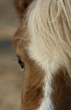 Gästebuch von Pferdchen4Kids