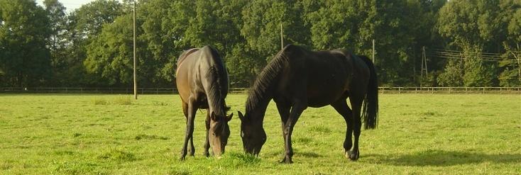 Faszinierende Pferde