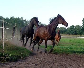 Pferdeherde in Bewegung
