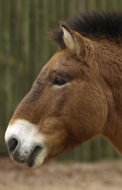 Alles rund ums Pferd - Pferdewissen für Kinder