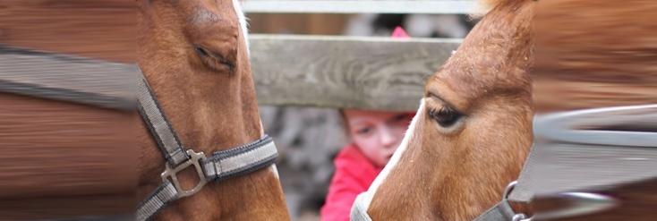 Die Pferde und Du - Alles, was Du wissen musst