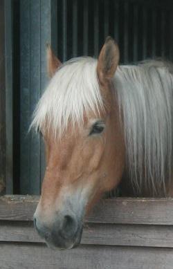 Du und die Pferde auf Pferdchen4Kids