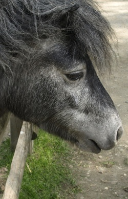 Dein erstes eigenes Pferd