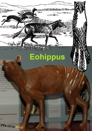 Eohippus - Urpferd: Pferdchen der Morgenröte