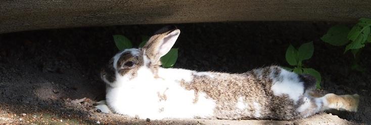 Dieses Kaninchen fühlt sich wohl und genießt die Sonne.