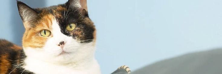 Haustier Katze für Kinder
