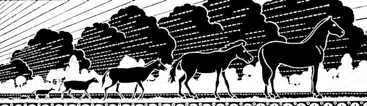 Entwicklung / Evolution des Pferdes