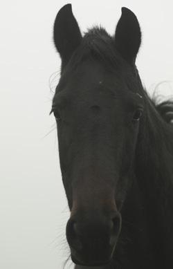 Spezialisiert auf die Lebensweise: der Pferdekörper