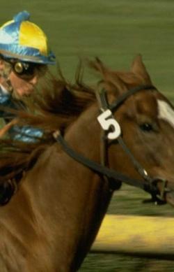 Pferdesport, Spiele mit Pferden und ganz viel Spaß - Pferdchen4Kids