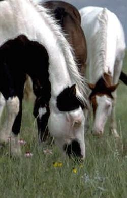 Beim Umgang mit Pferden muss man einiges beachten